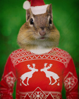 Cheeks_Xmas_Sweater.jpg