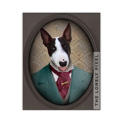 Bull Terrier - Magnum