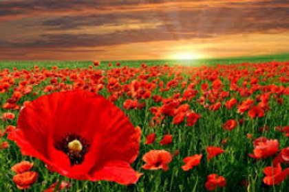 In Flanders Fields 1914-1918 - wind band