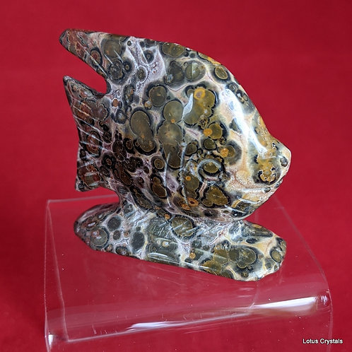 Orbicular Jasper Fish