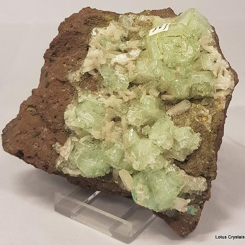 Green Apophyllite Cluster