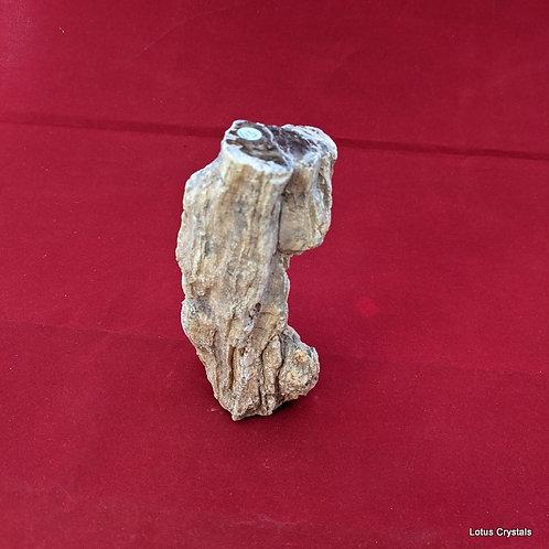Freestanding Petrified Wood Branch - Patagonia