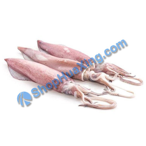02 Fresh Squid 0.8-1.0LB 新鲜鱿鱼 /包