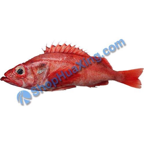 02 Ocean Perch 1.2-1.5LB 大眼红鱼 /EA