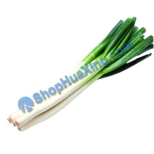 01 Chinese Big Green Onion 1.0-1.3 LB 大葱 京葱 /包