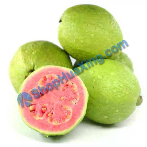 01 Red Guava 1.1-1.3 LB 红心蕃石榴 芭乐 /包