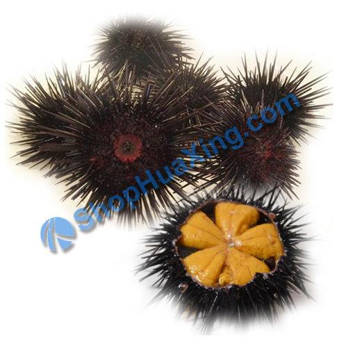 02 Wild Sea Urchins 1-1.2 LB 海胆 /包