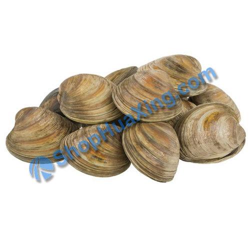 02 Cherrystone Clam / Chowders 1.7-1.9LB 大花蛤 /包