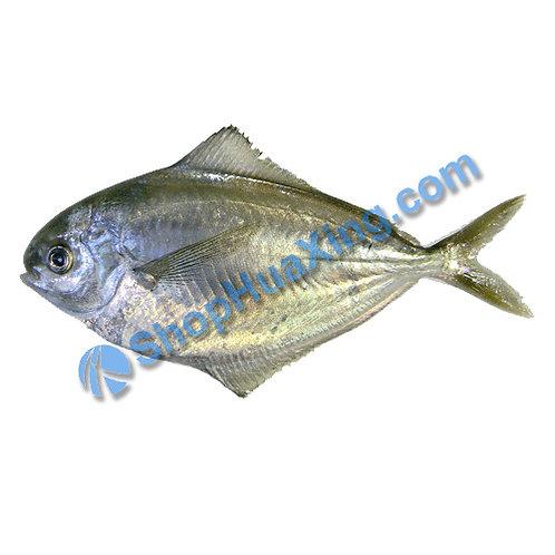 02 Butterfish 1.1-1.3LB 黄油鱼 /包