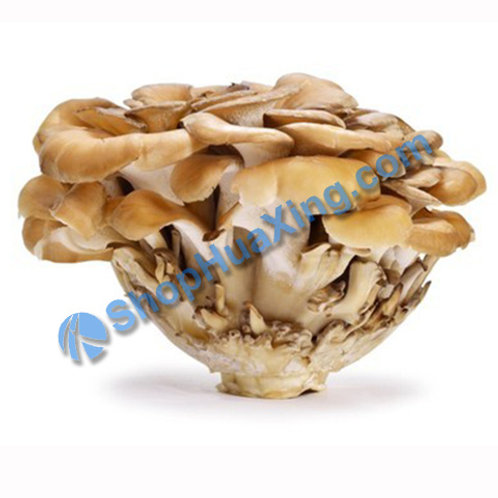 01 Maitaki Mushroom Organic 100g 有机舞菇 /包