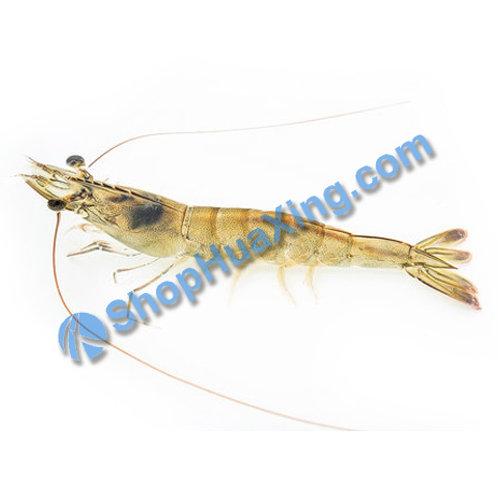 02 Live Shrimp 游水虾 /LB