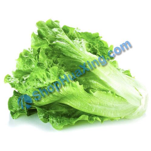 01 Long Lettuce 1.4-1.6LB 长生菜 绿生菜 /包