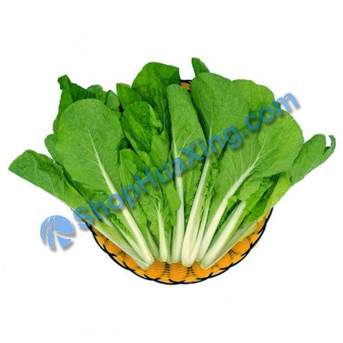 01 Bok Choy Tip 1.4-1.6LB 白菜苗 白菜芯 /包