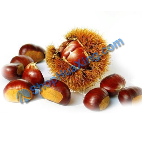 01 Korean Chestnut 1.9-2.1LB 板栗 栗子 /包