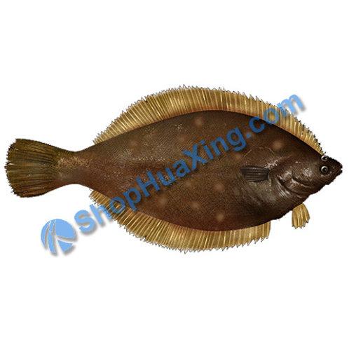 02 Yellowtail Flounder Fluke Fish 1.2-1.5 LB 波士顿半边鱼 黄盖鲽 /EA