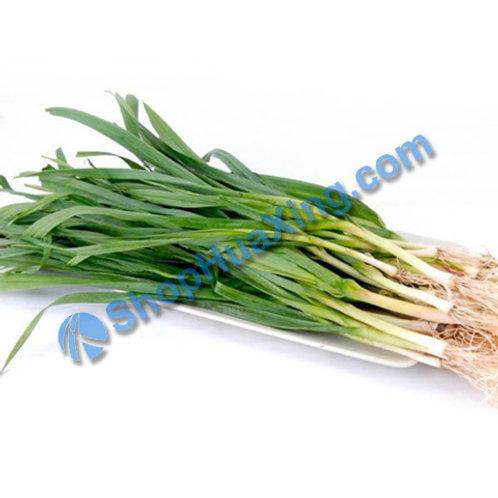 01 Garlic Green 1.0-1.3LB 蒜苗 唐蒜 /包