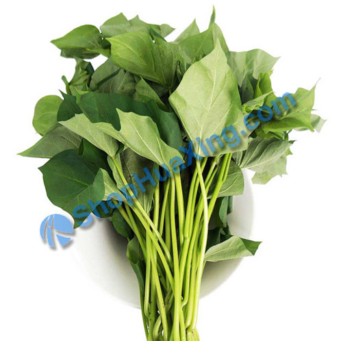 01 Yam Leaf Mue 1.4-1.6LB 地瓜叶 蕃薯苗 /包