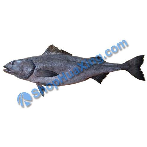 02 Black Cod 5-5.3 LB 黑鳕鱼 /EA