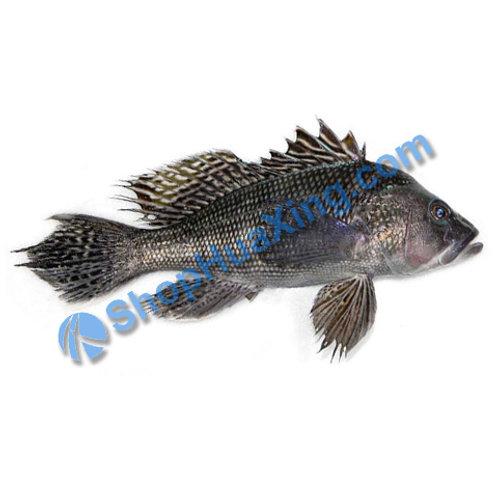 02 Wild Black Sea Bass 1.1-1.4 LB 野生黑鲈鱼 /包