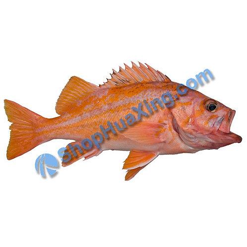 02 Canary Rockfish 2.6-3.0LB 金丝雀石斑鱼 /EA