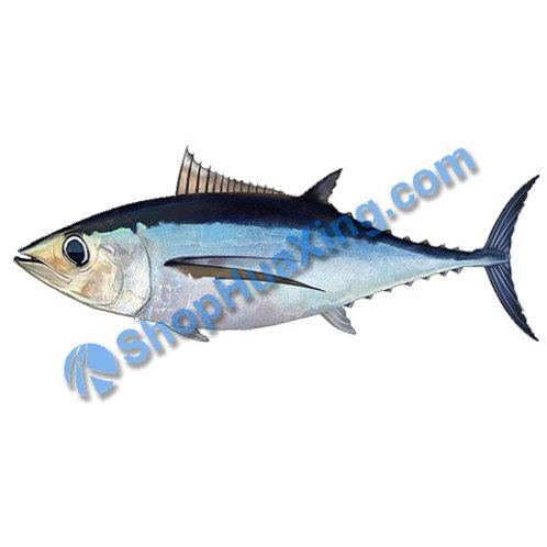 02 Albacore Tuna 金枪鱼 吞拿鱼 /LB