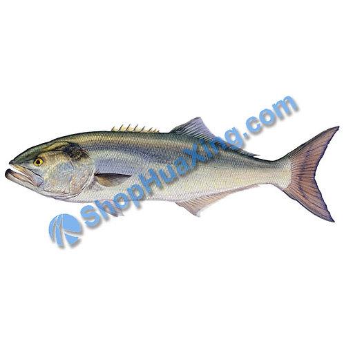 02 Fresh Blue Fish 1.7-2.0 LB 蓝鱼 /EA