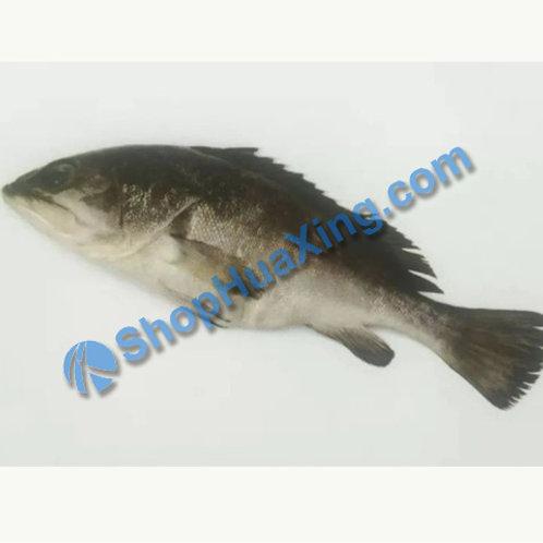 02 Yellowtail Rockfish 2.4-2.6LB 青斑/只