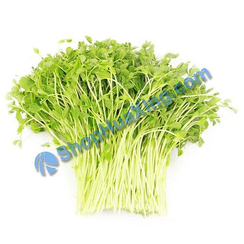01 Pea Sprout 8oz 小豆苗 豌豆苗/包