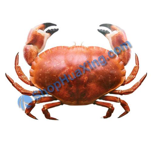 02 Stone Crab 2.8-3.3LB 石头蟹 /包