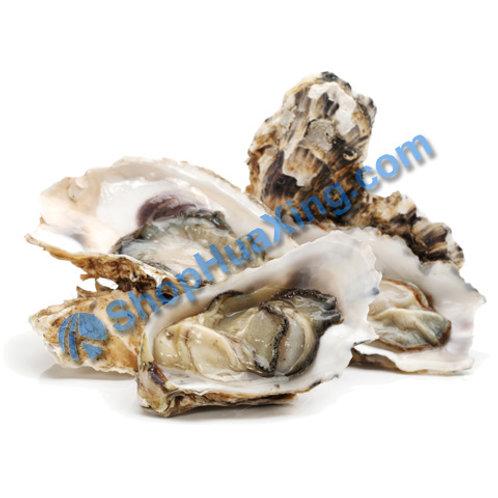 02 Shell Oyster 有壳大生蚝 /EA