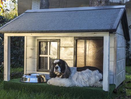 Animali domestici nelle case vacanze: minaccia o opportunità?