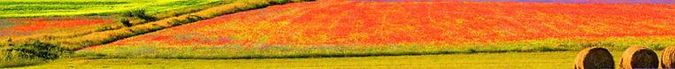 castelluccio-fioritura3.jpg