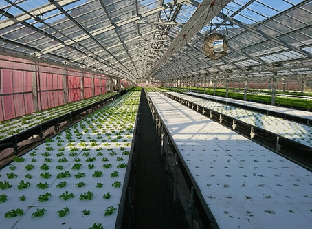 水耕栽培ハウス