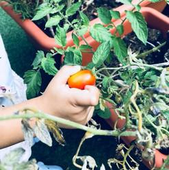 Ed ecco che la tua mano mi mostra qualcosa di speciale. Hai trovato un pomodoro. Ti invito a prenderlo.