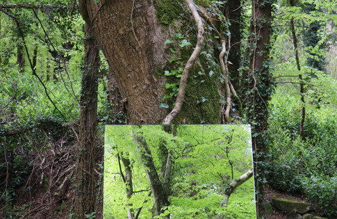 Forest's Echo no.5, Colourful Photograph, Beata Blaszczok, 2019