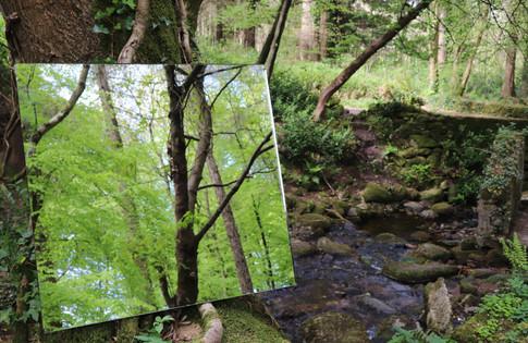 Forest's Echo no.1, Colourful Photograph, Beata Blaszczok, 2019