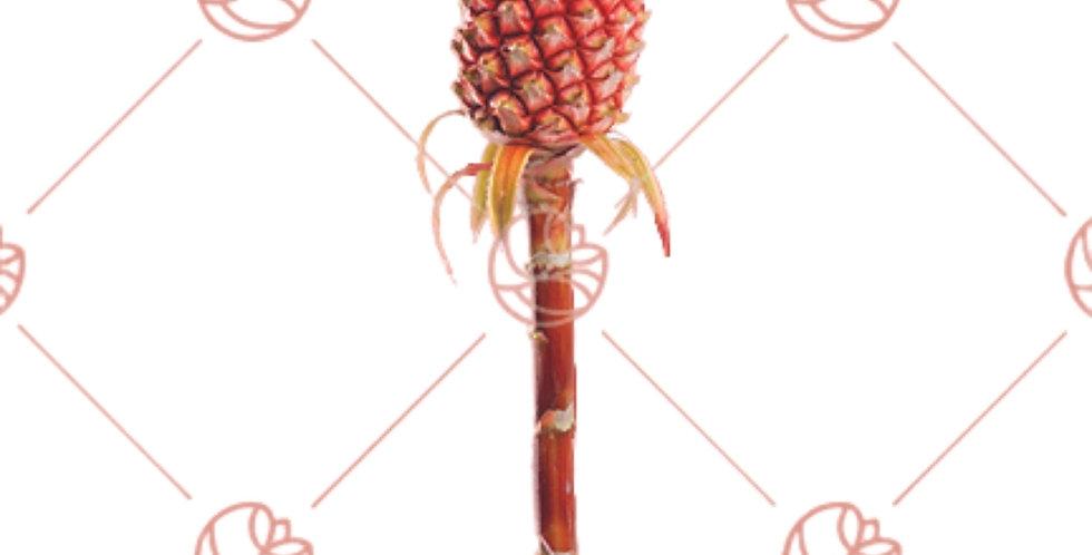 Ornamental Anana