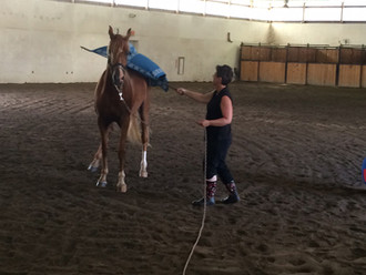 Horse Training Fundamentals