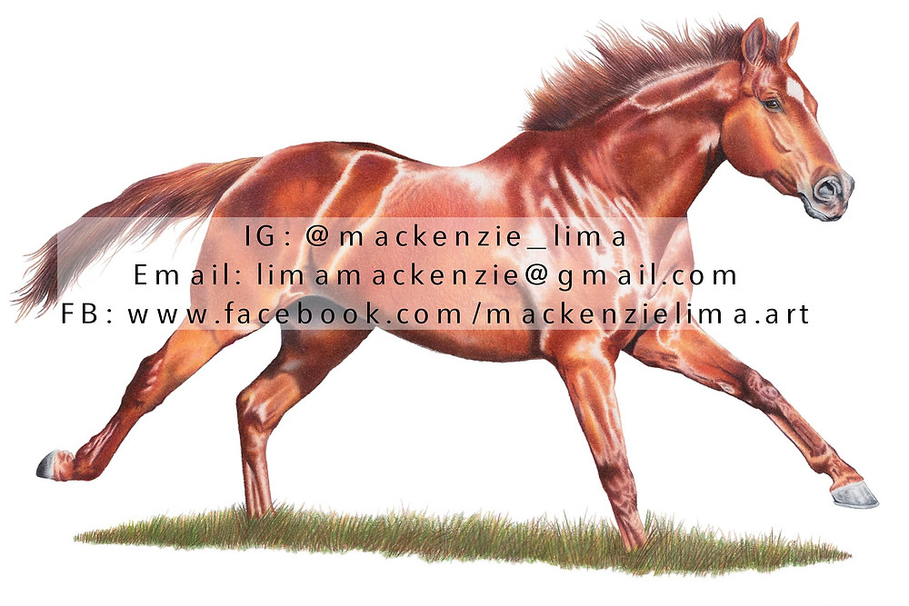 Mackenzie Lima Art