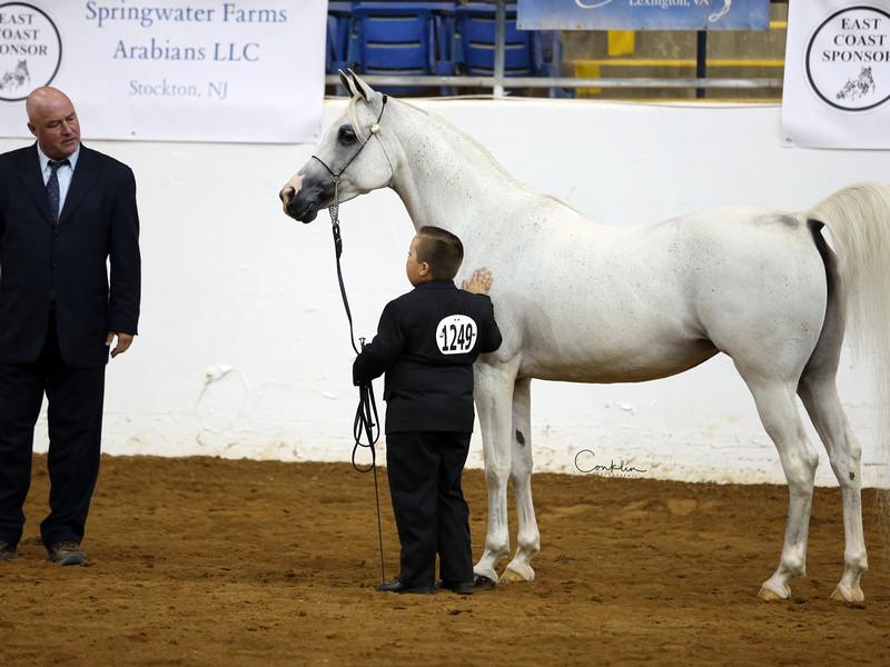 Arabian mare Brigetta PA and Chandler
