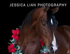Jessica Lian Photography