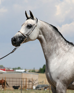 Equine photography by New York / Colorado Photographer Mike Troxler