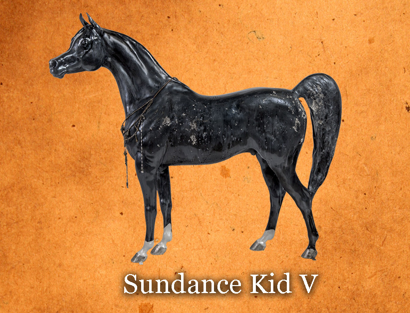 Arabian Horse For Humanity Sundance Kid V by Edward Lentsch part of the 2019 Hollywood Horse Charity Horse Show Auction