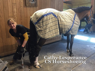 CS Horseshoeing, Cathy Lesperance