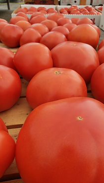 Tomatoes local produce.jpg