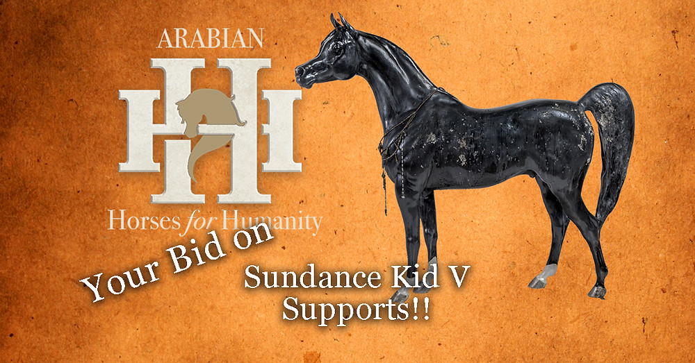 Arabian Horses For Humanity Sundance Kid V part of William Shatners Hollywood Charity Horse Show 2019 auction