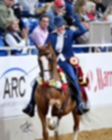 Ryan Show Horses Arabian and Half Arabian Horses-Client win