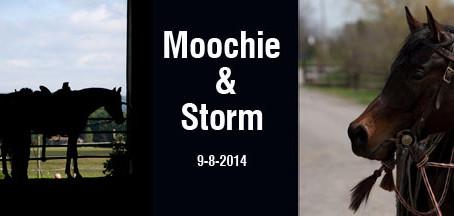 Training Log Moochie and Storm