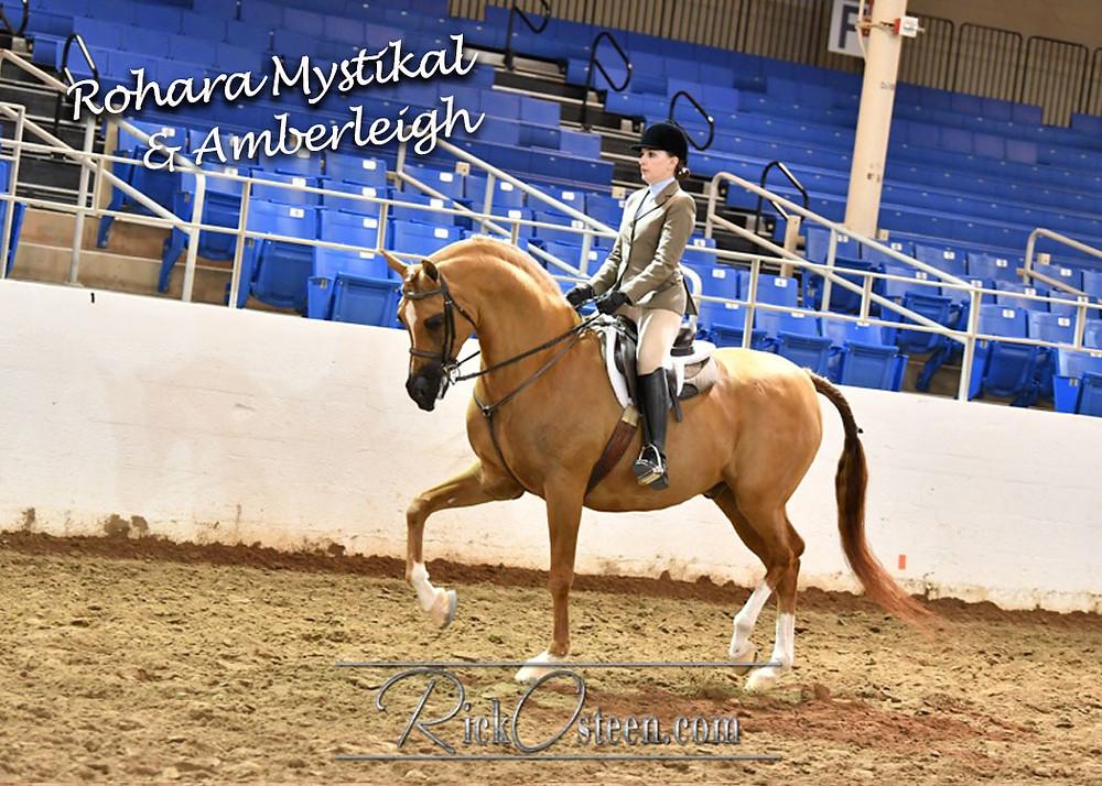 Arabian gelding Rohara Mystikal trained by Albuquerque trainer Mariah Wilson