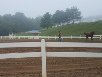 Blue Ridge Arabian Classic Thursday Morning
